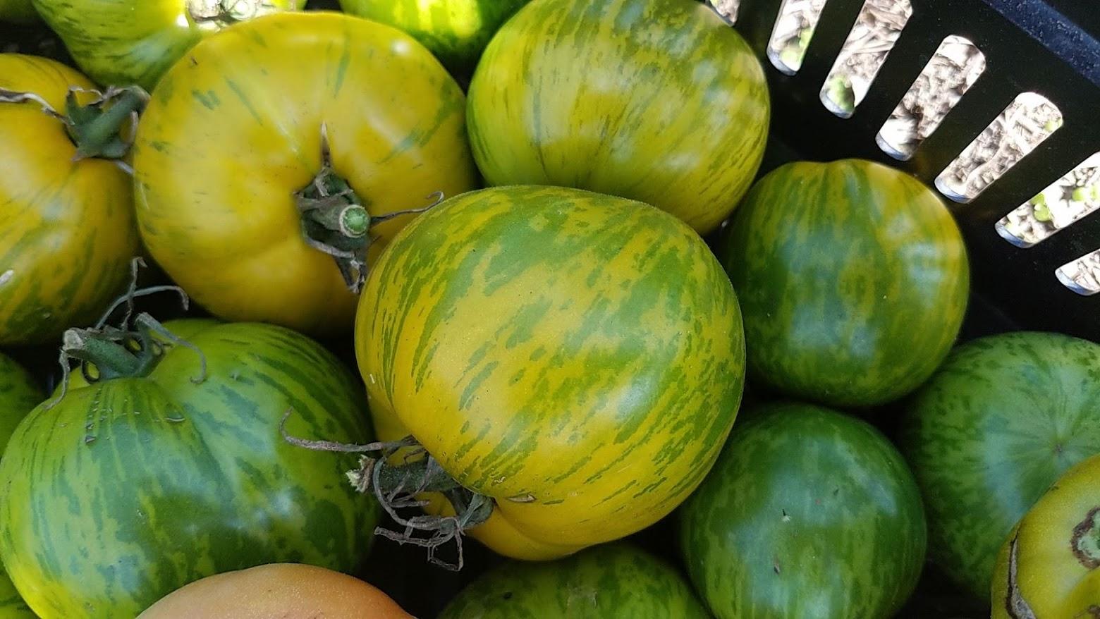 Green Zebra tomato.jpg