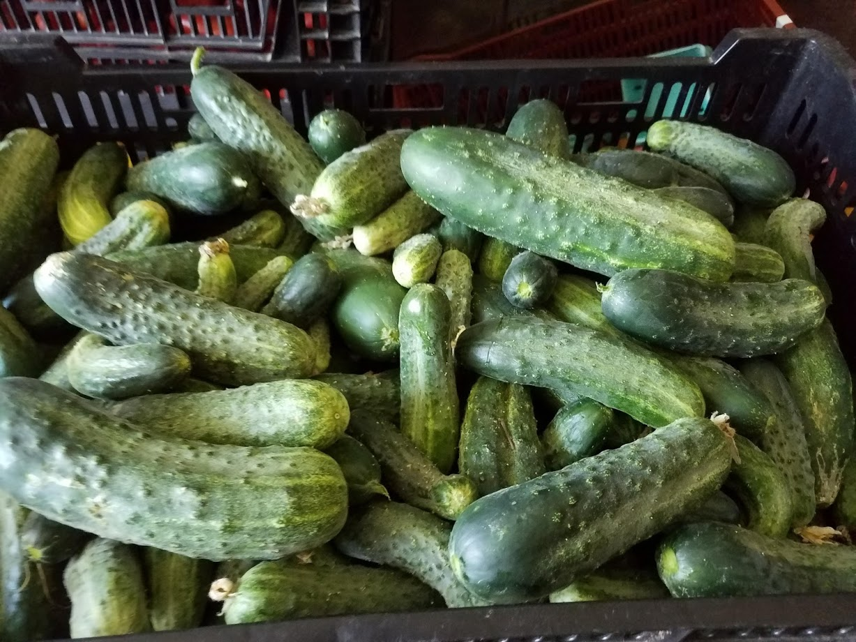 Pickling cucumber 2.jpg