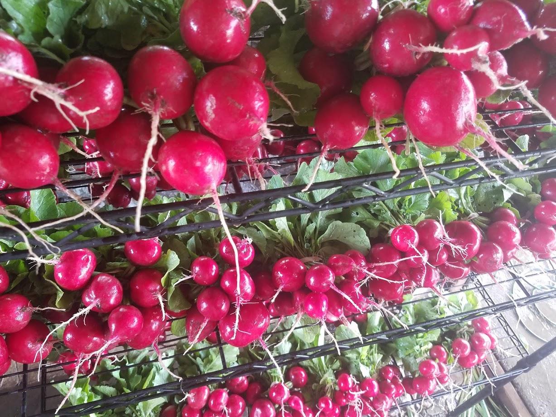 washed radishes.jpg