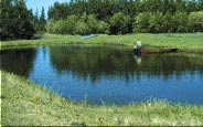 Water is trapped in man-made reservoirs (dugouts) for on-farm uses of water. These dugouts provide ideal conditions for plant and algae growth because they are shallow in addition to becoming loaded with nutrients.