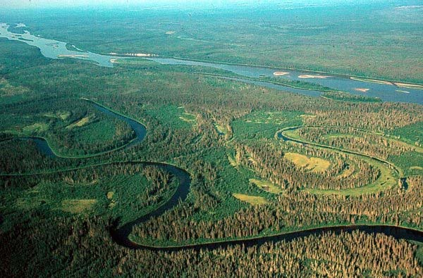 Athabasca River and Wetlands; David Dodge, The Pembina Institute