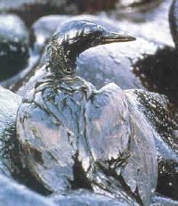 Bird Covered in Oil after Exxon Valdez Oil Spill;  https://sludge.wordpress.com/2006/08/25/remember-alaska-and-exxon-valdez/