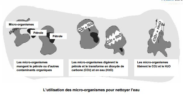micro-organismes nettoyer l'eau