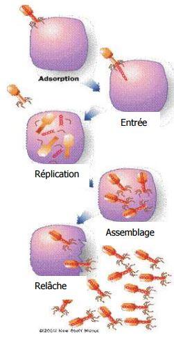 chaine virus