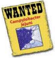 wanted: campylobacter