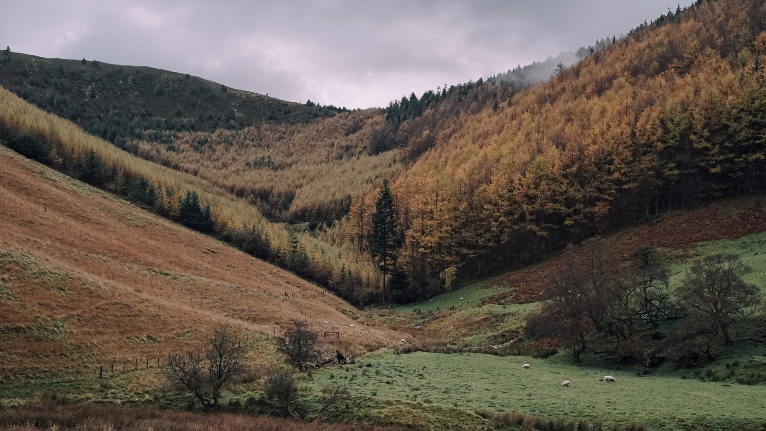 Snowdonia Autumn | Zeiss Lenspire