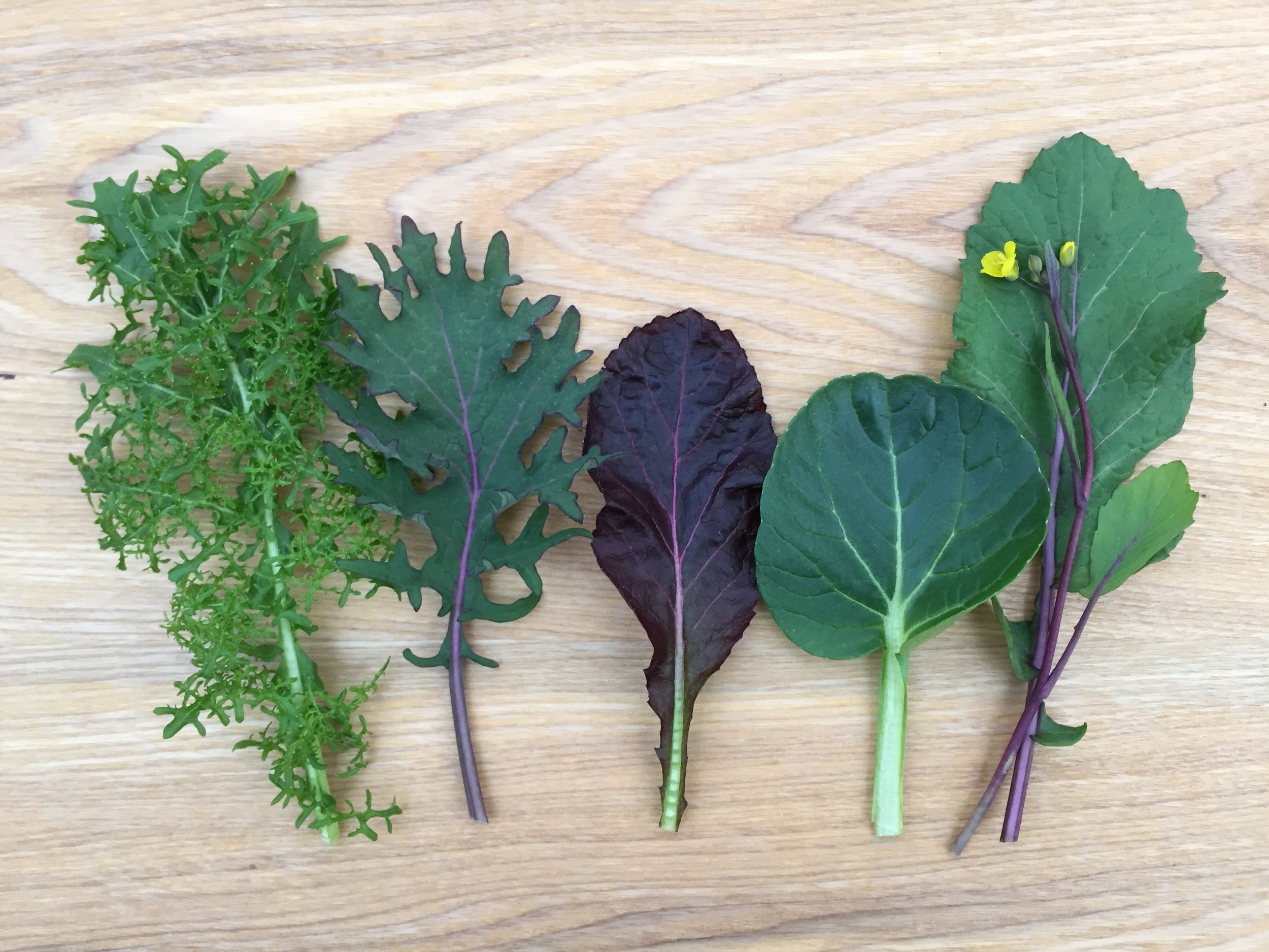 From left to right: Green Mustard, Kale, Red Mustard, Tatsoi, Flowering Kale (Hon Tsai Tai)