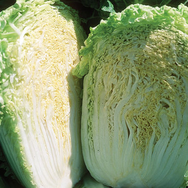 Napa Cabbage (Picture from Johnny's Selected Seeds)