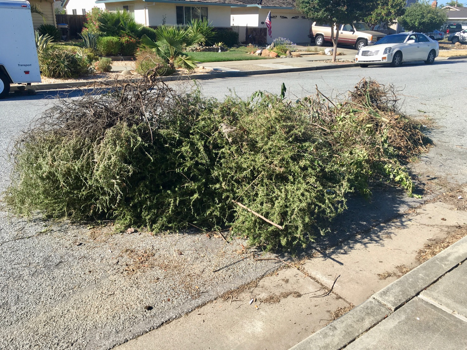 Yard Waste, Cambrian Pile