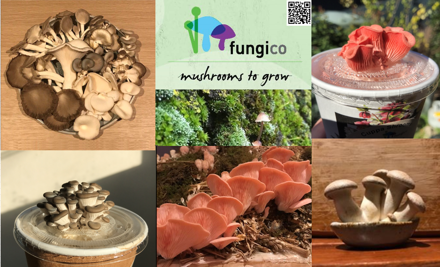 FungiCo.png