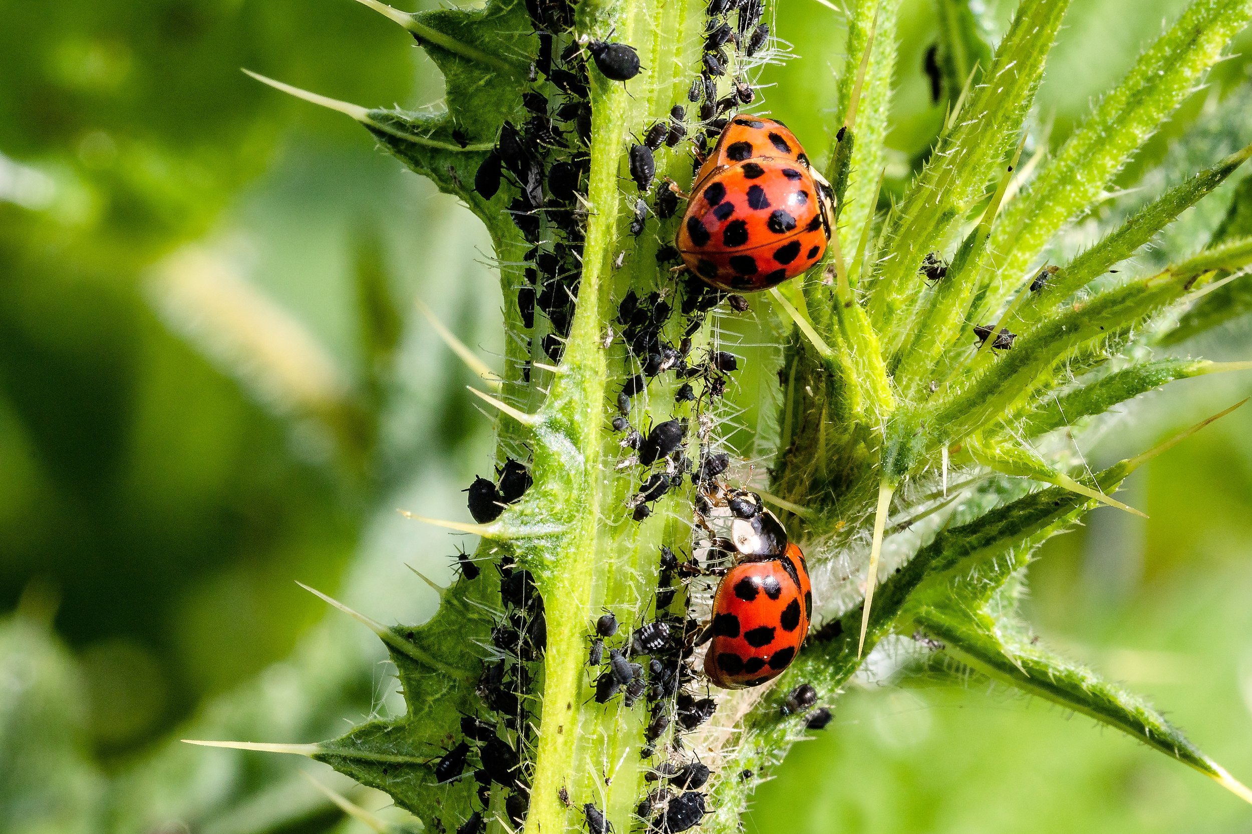Pests and diseases.jpg