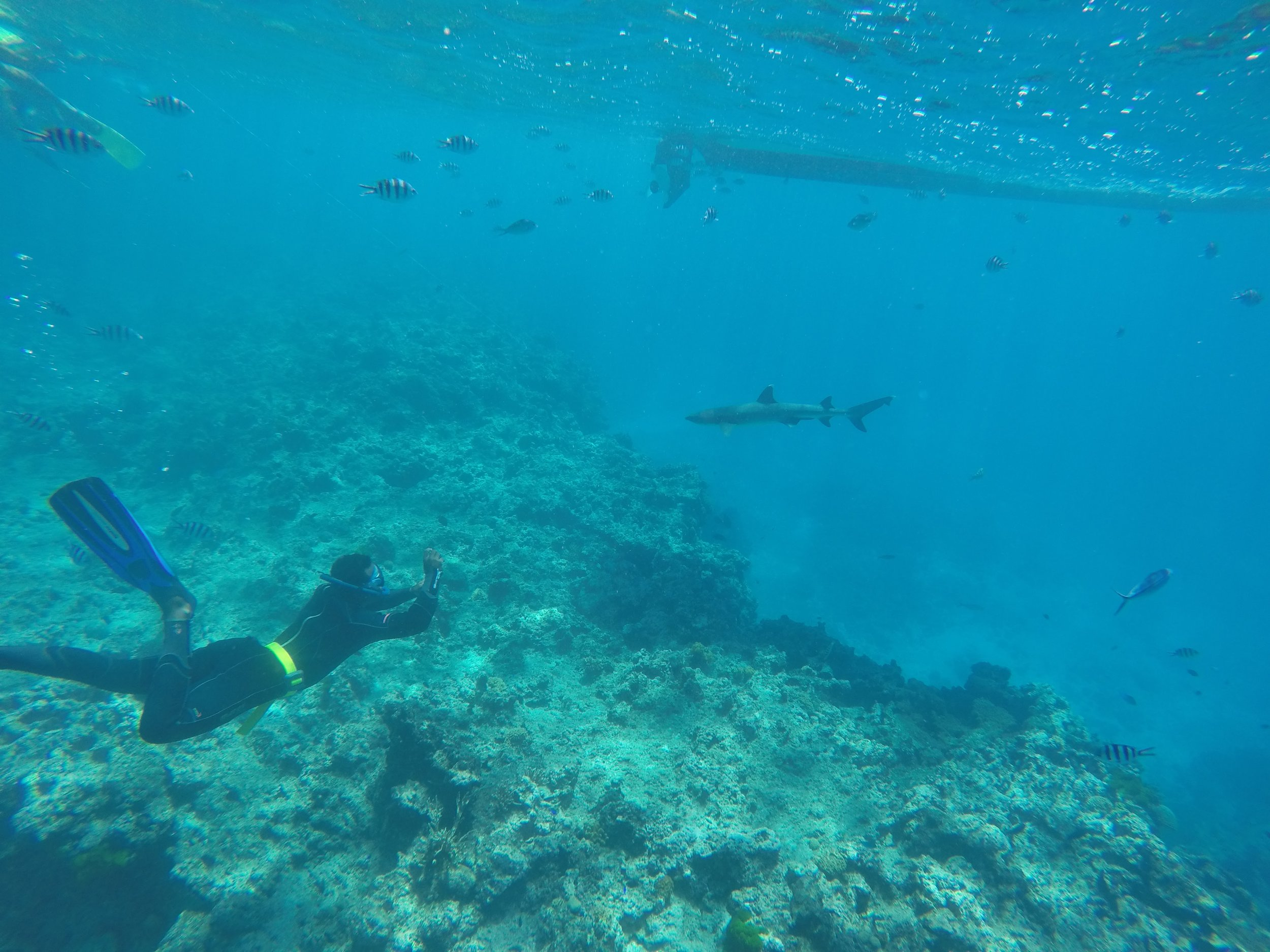 A member of the Kuata Dive Team takes a picture of a reef shark below our boat.
