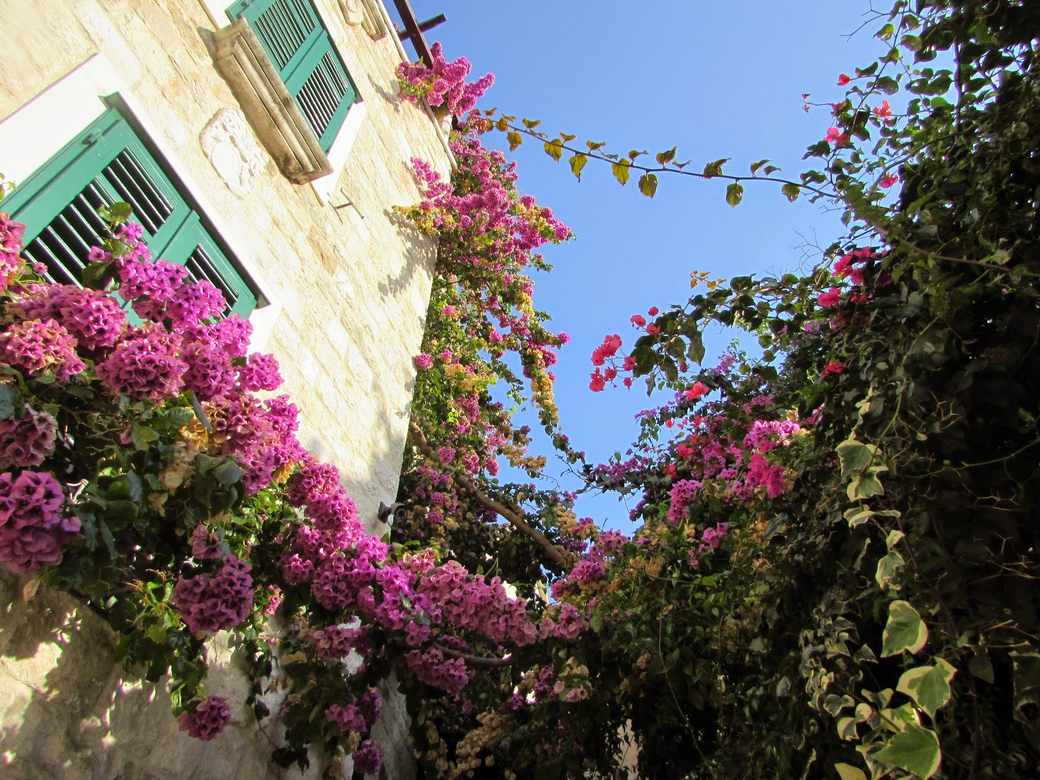 Every little nook and back alley seemed to be full of bougainvillea.