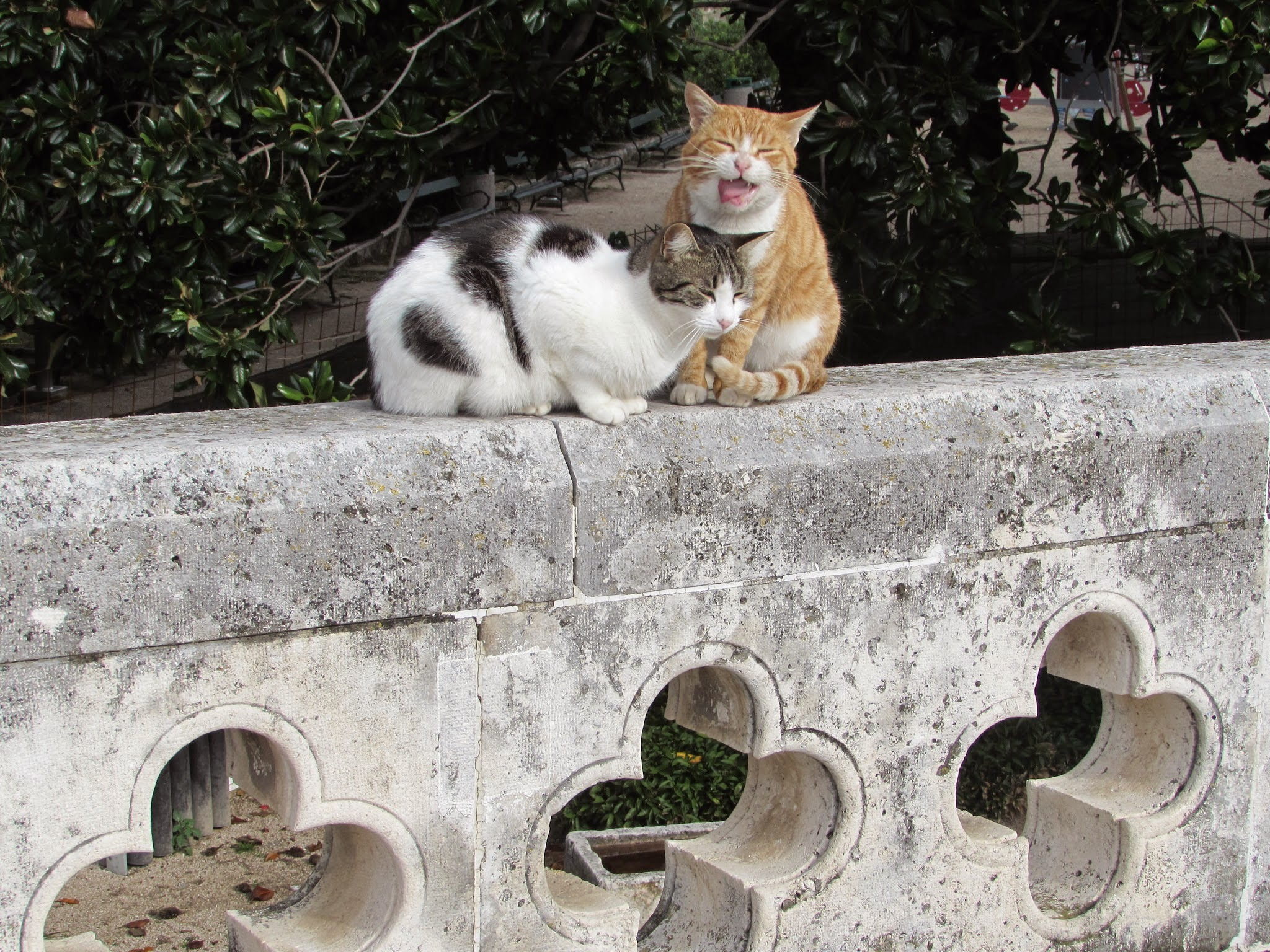 Dubrovnik in particular seemed to have a cat or two around every corner.
