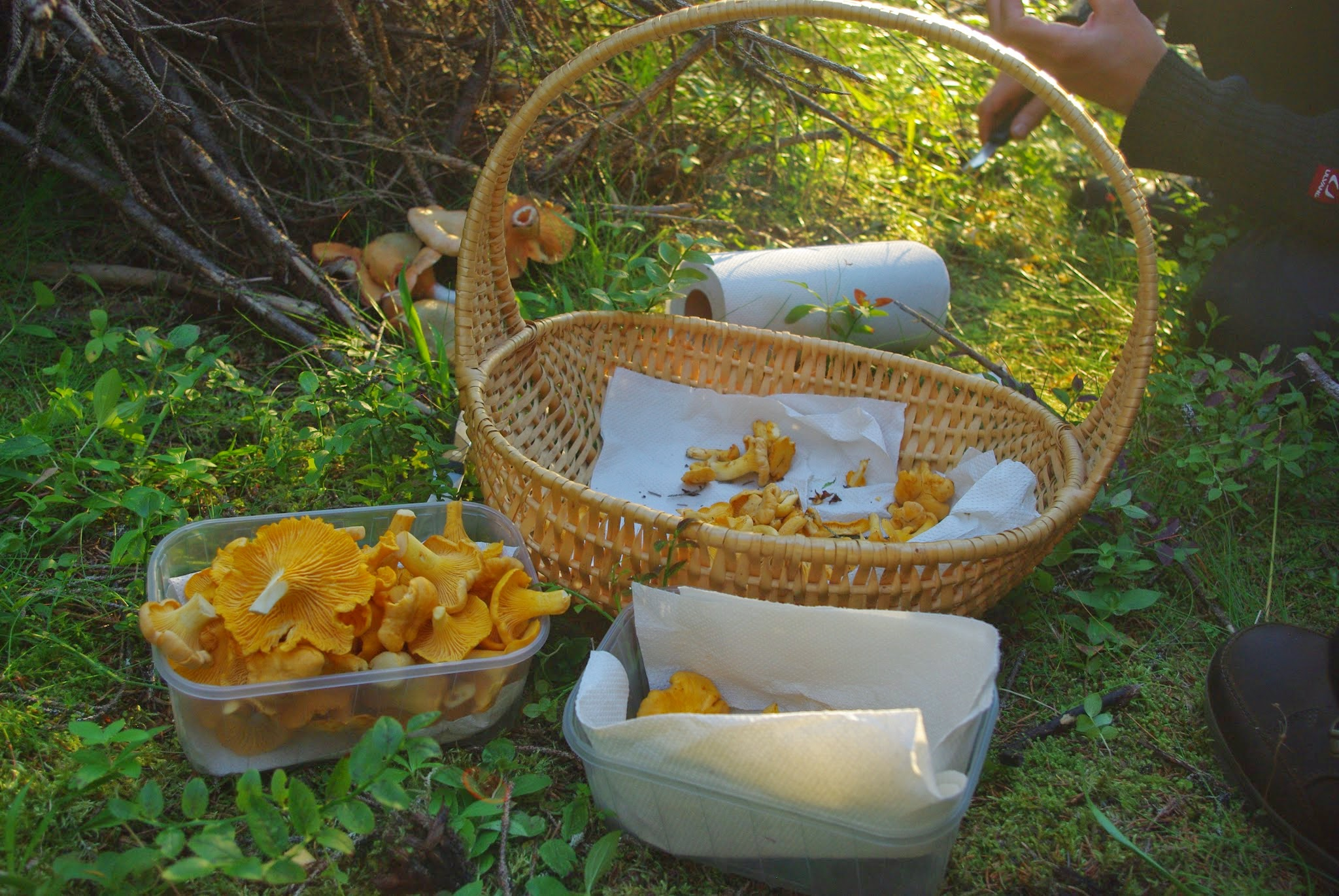 We struck gold! Most of the mushrooms our crew found were the ever-delicious and famous chanterelles. I found a cluster about ten myself and couldn't have been more excited.