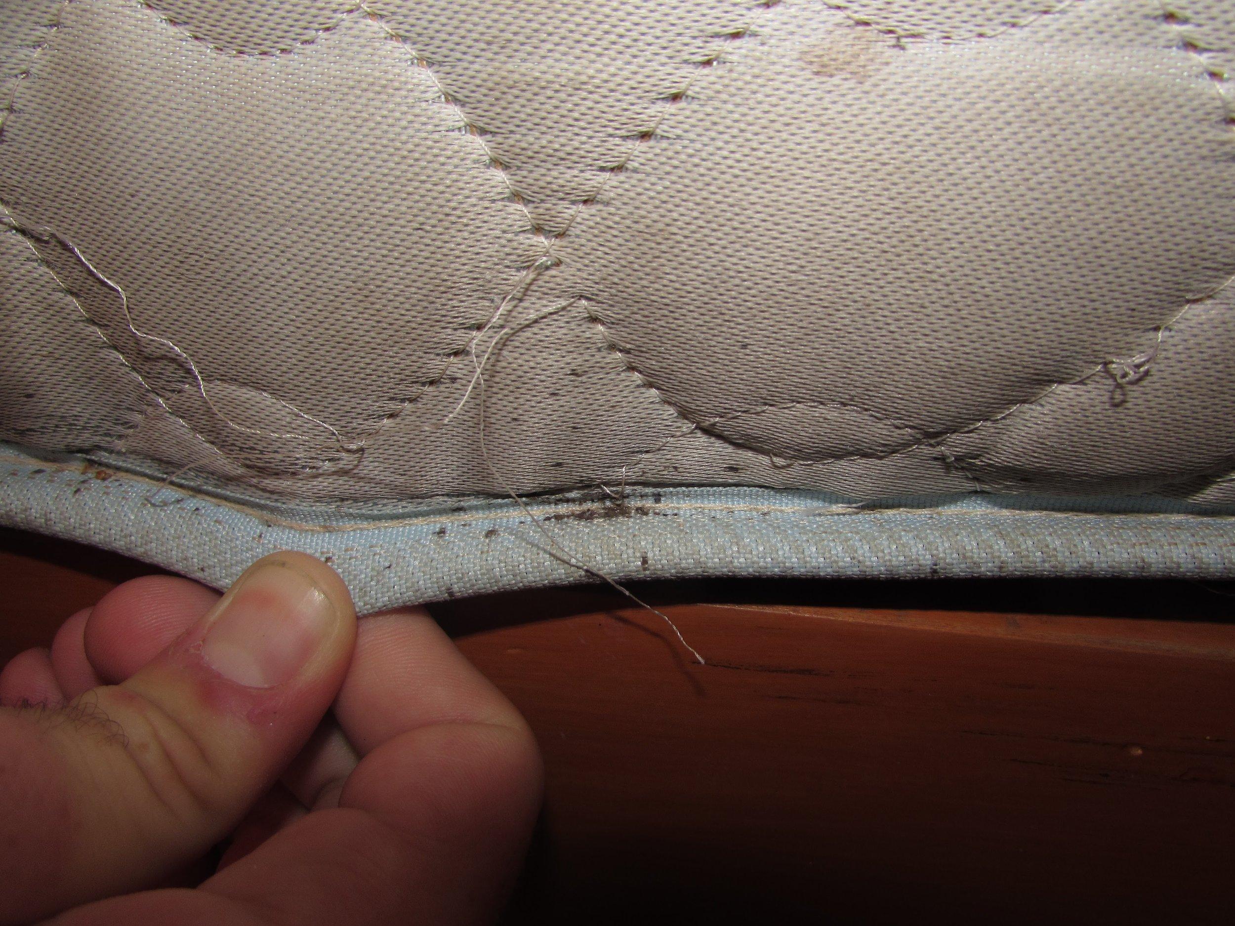 Bed bug poo on our mattress in Nadi, Fiji.