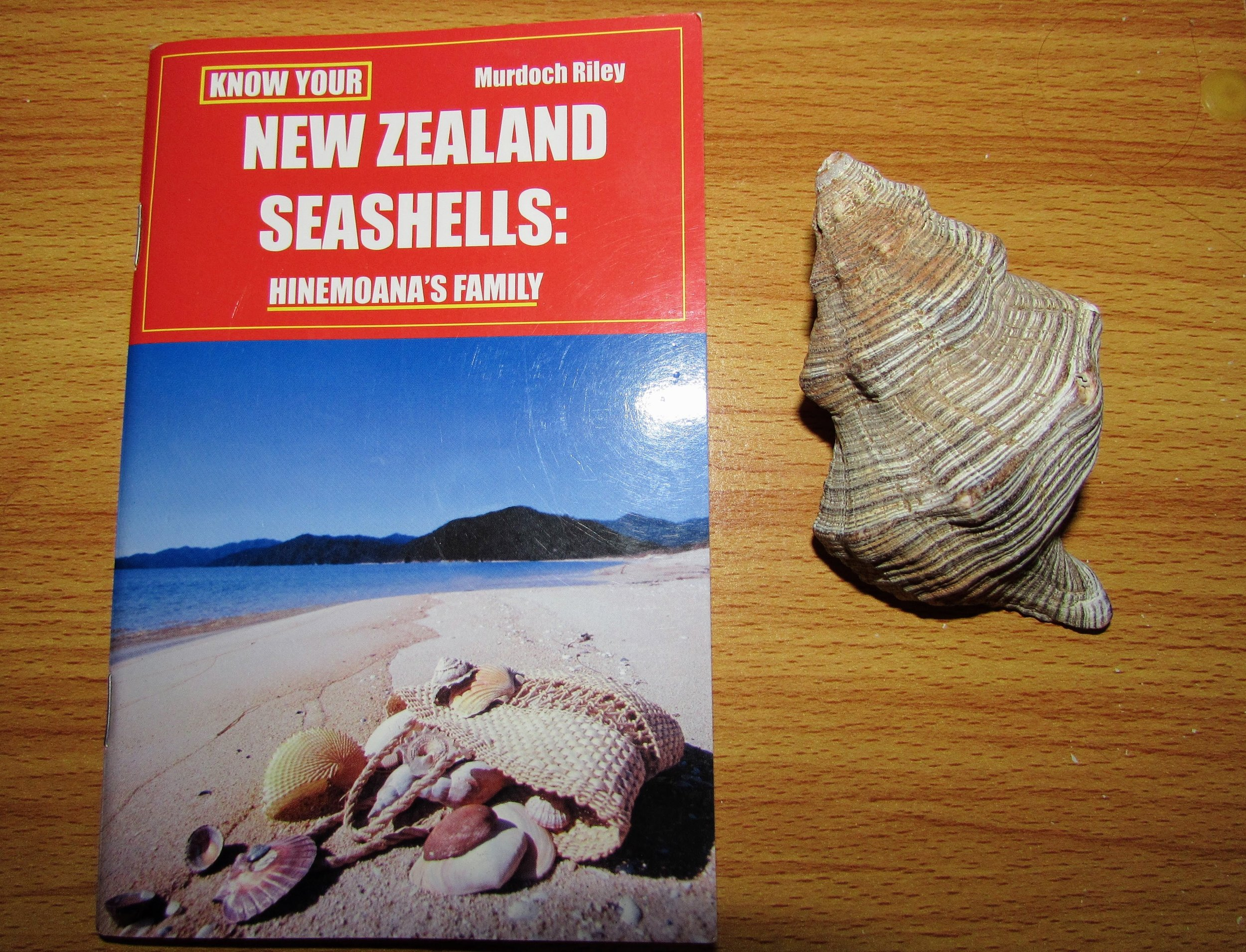 In one of Paihia's book shops, I bought this New Zealand seashell guide. Next to it is a palm-sized worn siphon whelk that Emmett found, also in Paihia.
