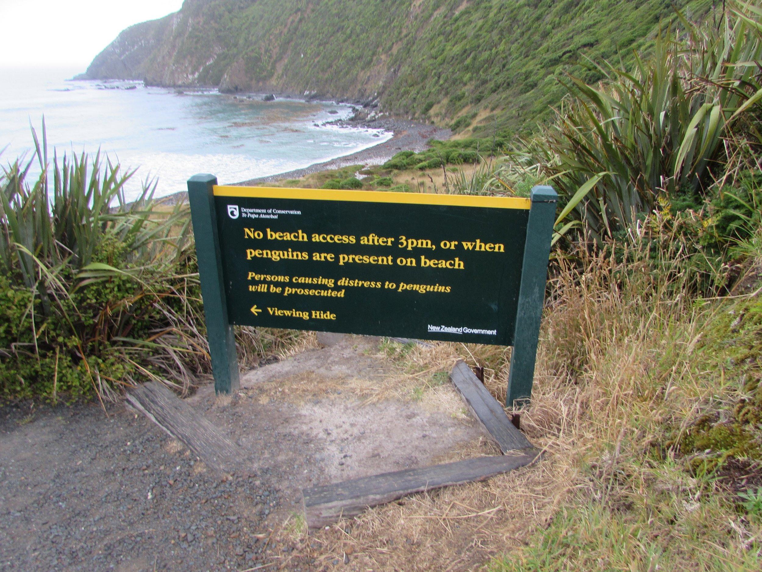penguin viewing, catlins NZ