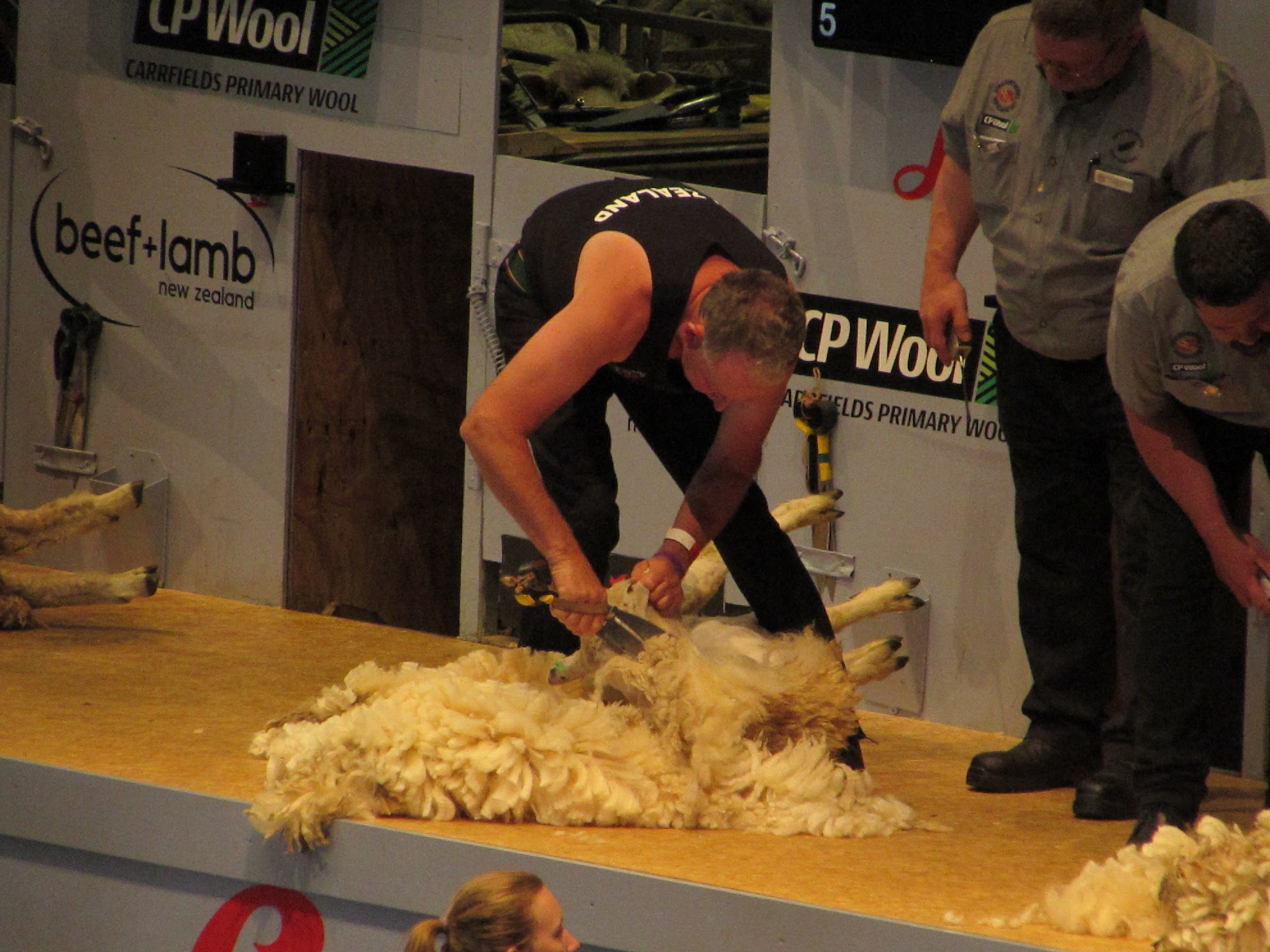 The Wild Woolly World Of Competitive Sheep Shearing Savvy