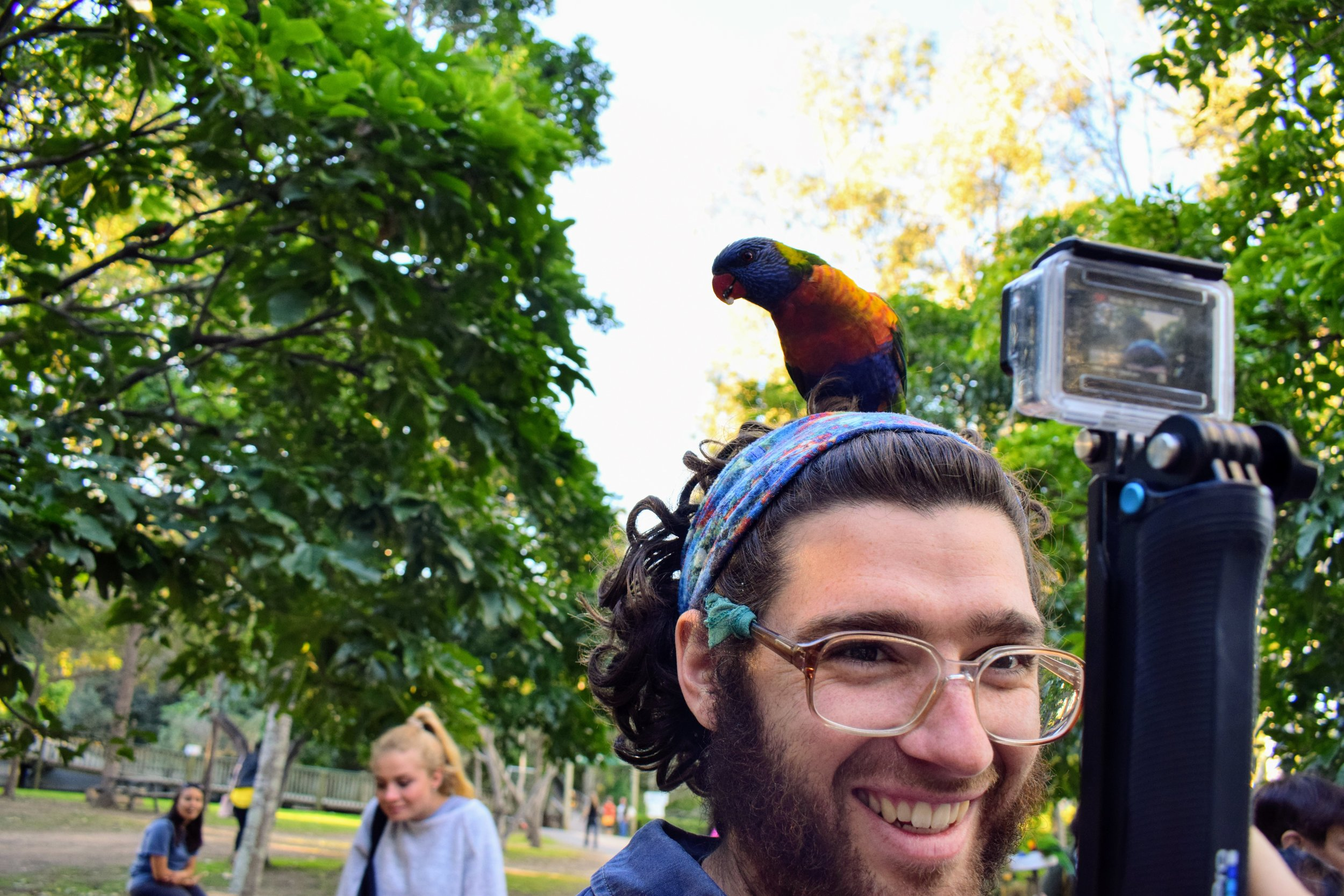 Emmett was filming the lorikeet chaos on the GoPro when this guy landed on his head.