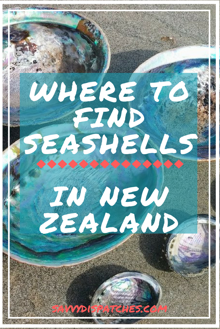 where to find seashells in new zealand