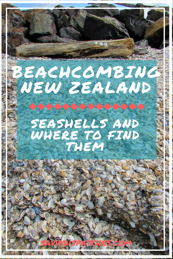 your guide to finding seashells on new zealand's beaches