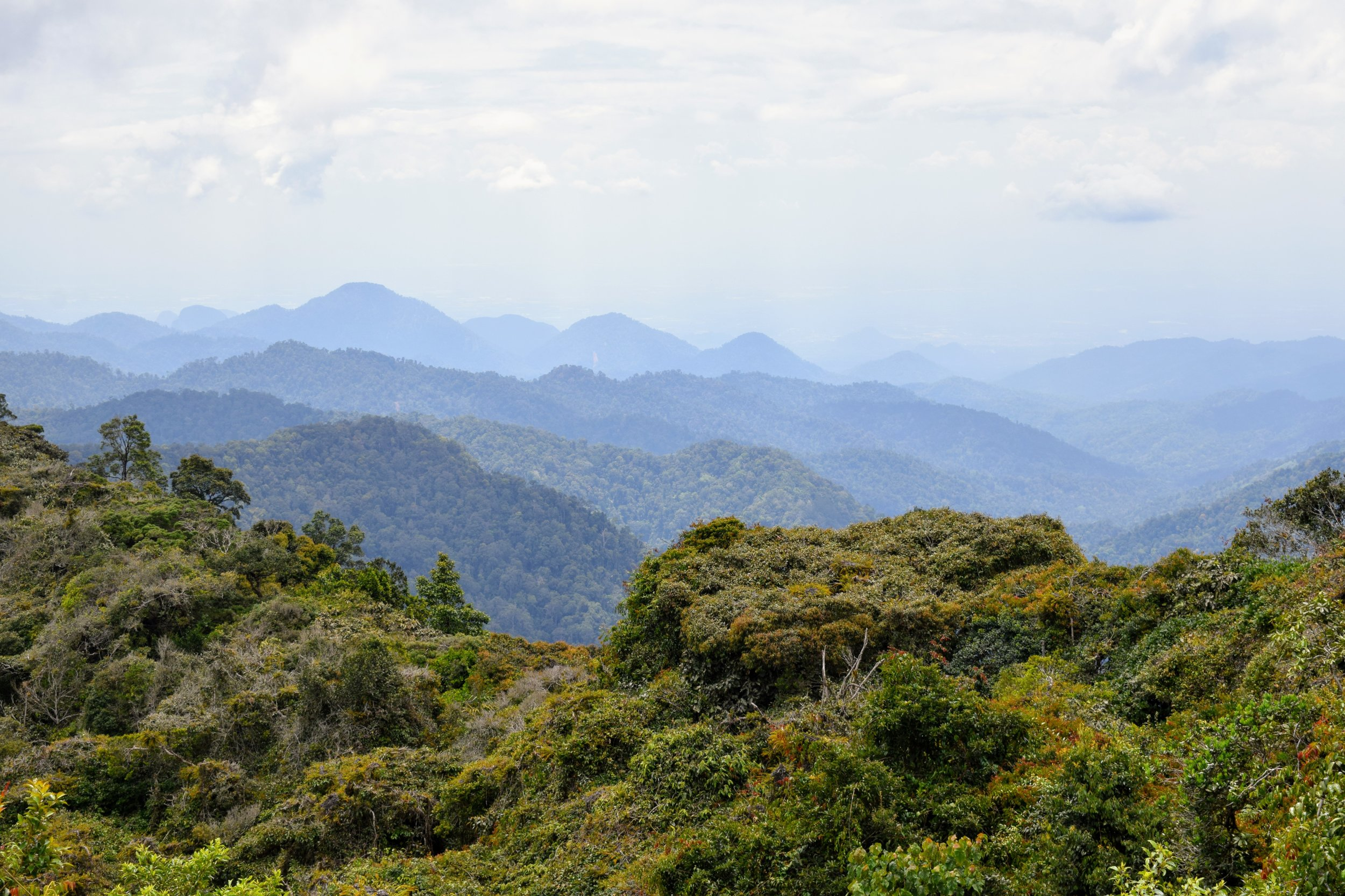 The view from the top of Gunung Jasar on Jungle Trail Number 10 from Tanah Rata.