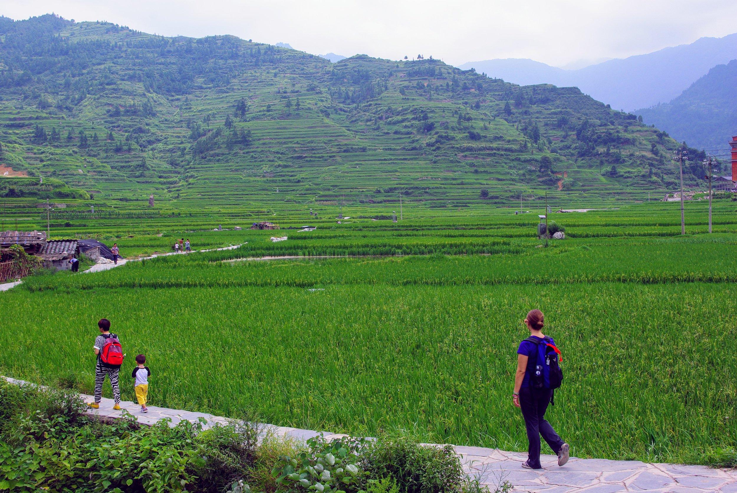 In Guizhou, China among the rice terraces.