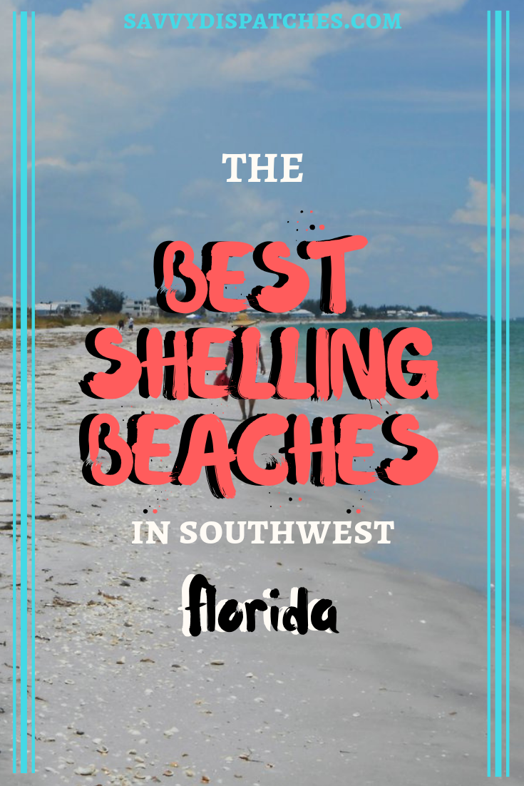 A Local's Guide to the best beaches for finding #seashells in Southwest Florida, USA // finding sea urchins, sanddollars, seashells, and more in #SouthwestFlorida // shells of Sanibel Captiva, Marco Island, Englewood, Venice, and more