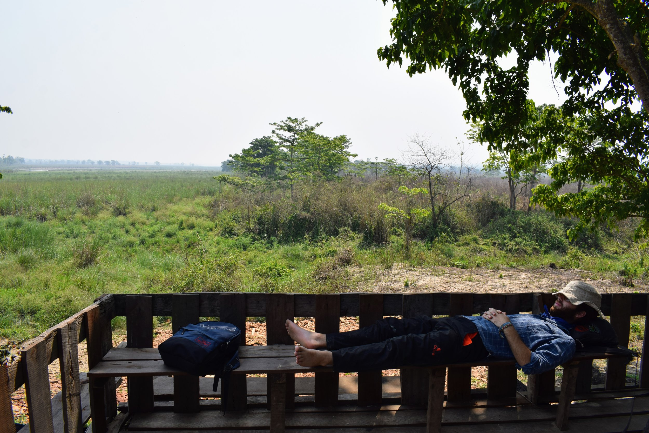 afternoon nap in chitwan national park