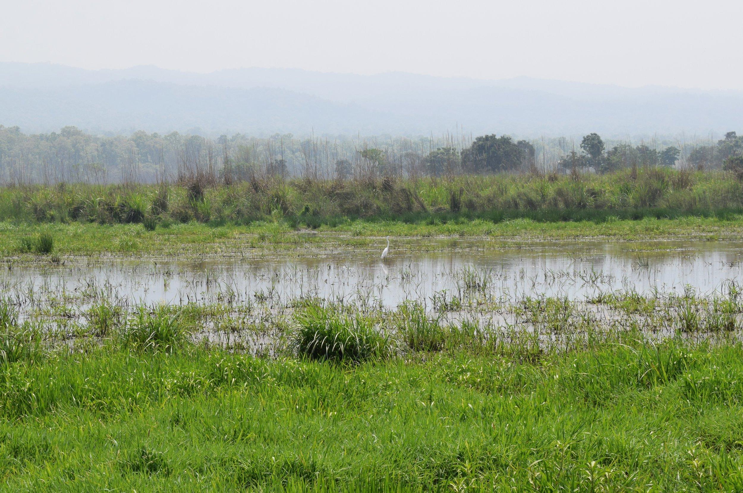 wetlands of chitwan national park