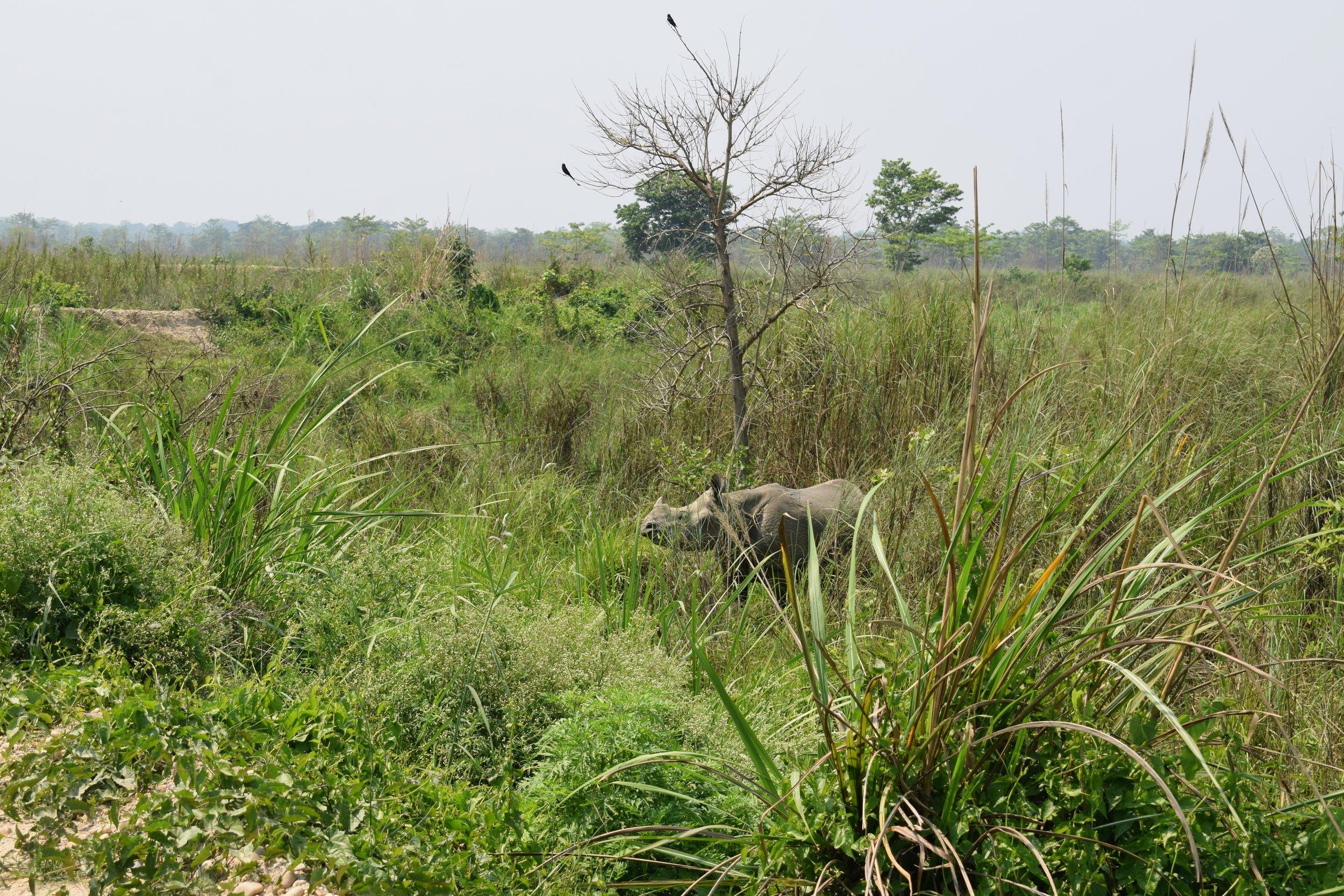 walking safari chitwan national park three