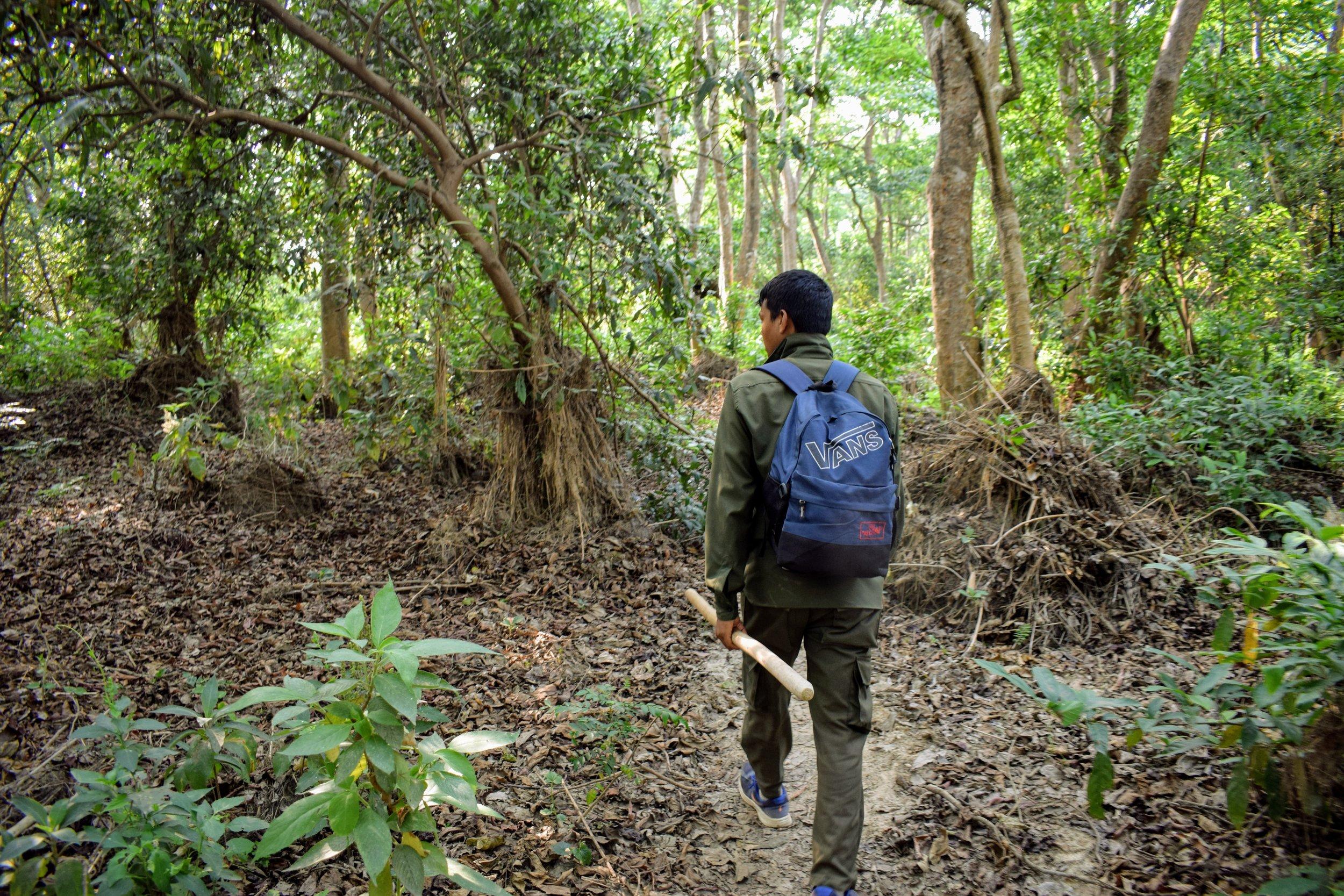 jungle in chitwan national park