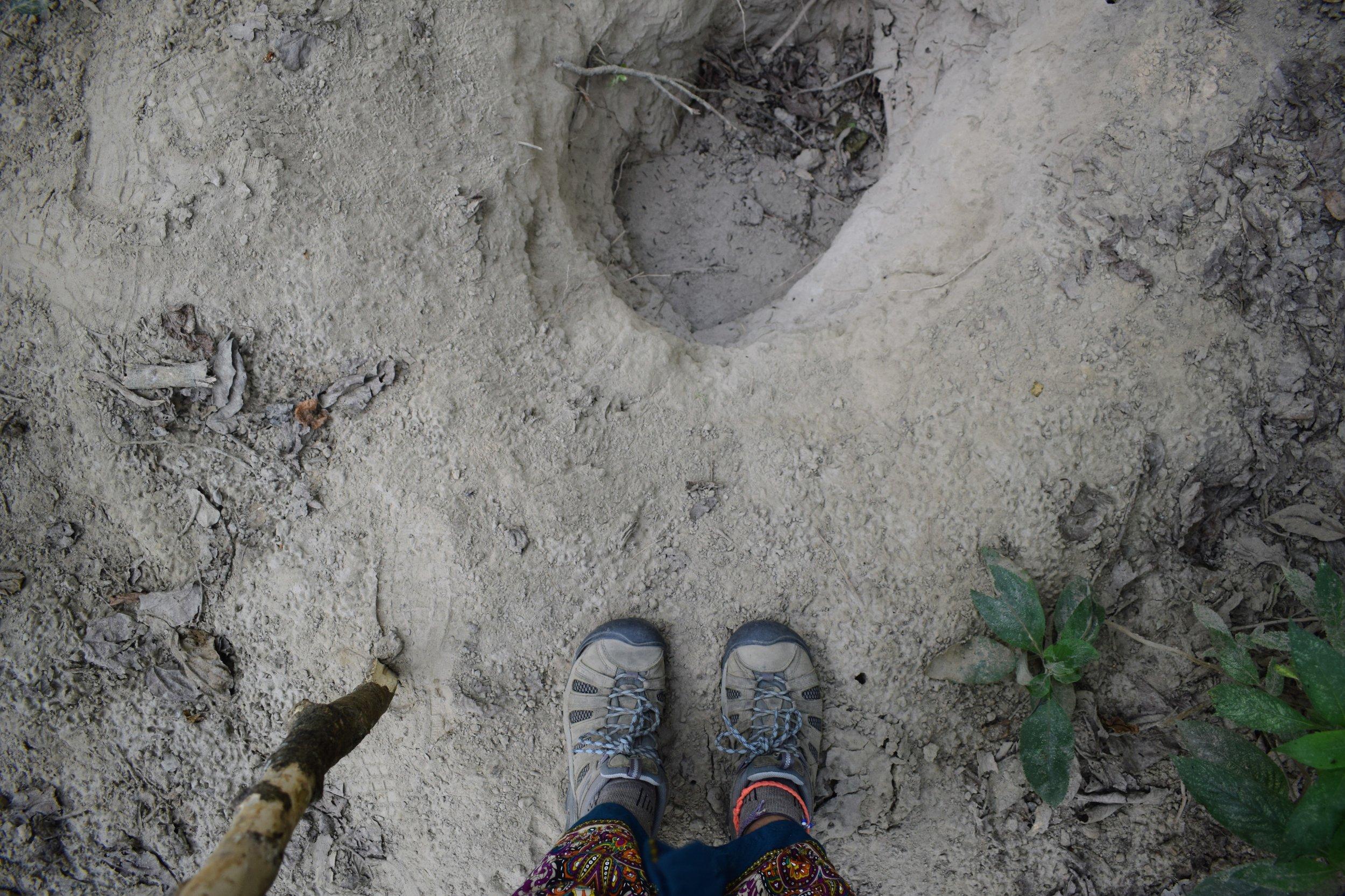 A hole dug by a sloth bear seeking termites