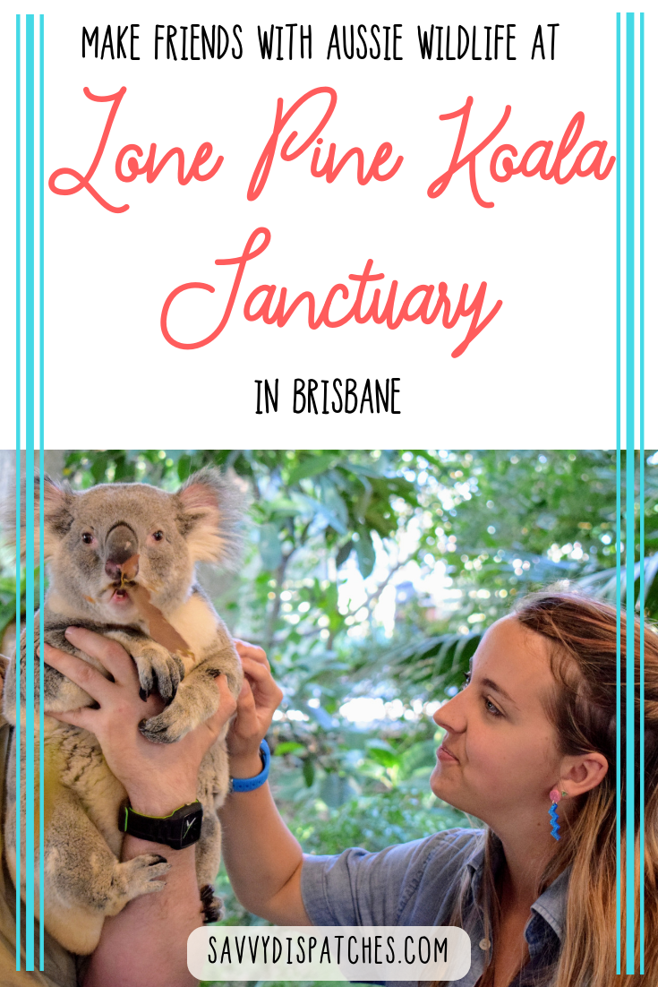 Wondering where to see native Australian animals like koalas, kangaroos, parrots, platypus, and more? The best way to get close to these creatures is at Lone Pine Koala Sanctuary in Brisbane Australia! It's one of the top things to do in Brisbane. #brisbane #australia #travelaustralia #thingstodobrisbane