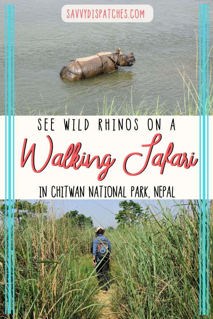 Adventure Travel Nepal   Rhino Safari in Chitwan National Park   Things to do in Nepal #nepal