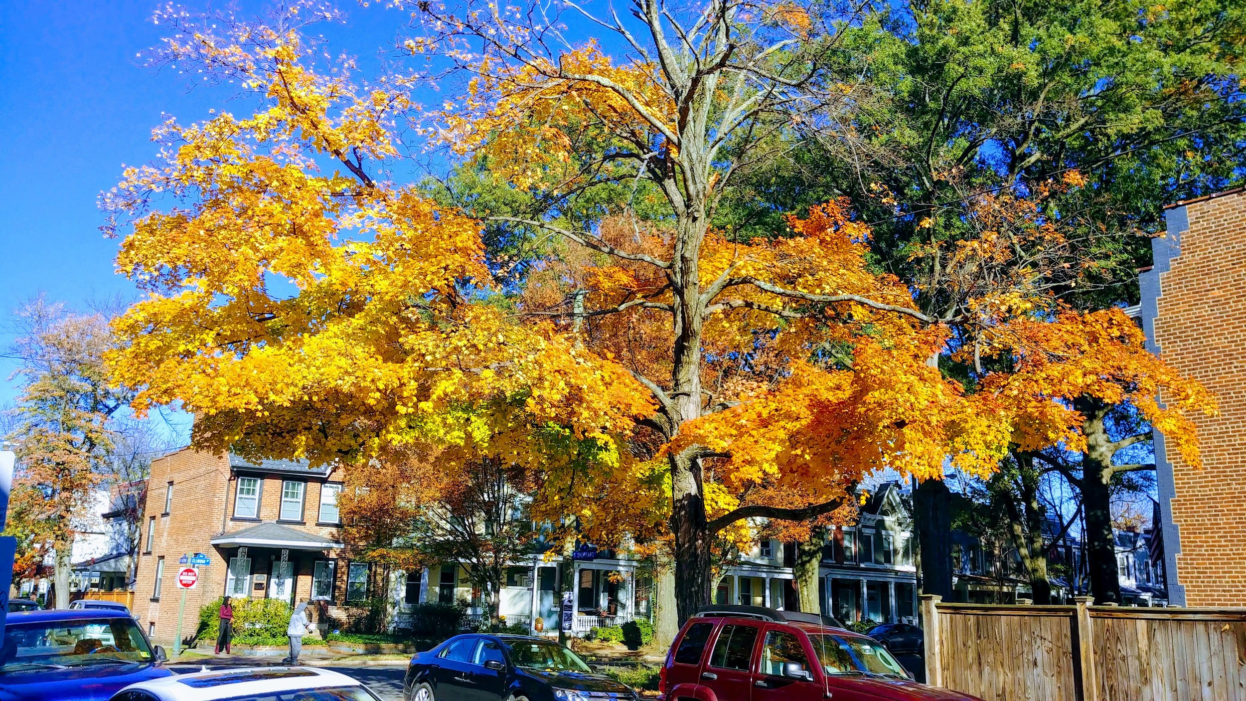 Autumn color in downtown Richmond, Virginia.