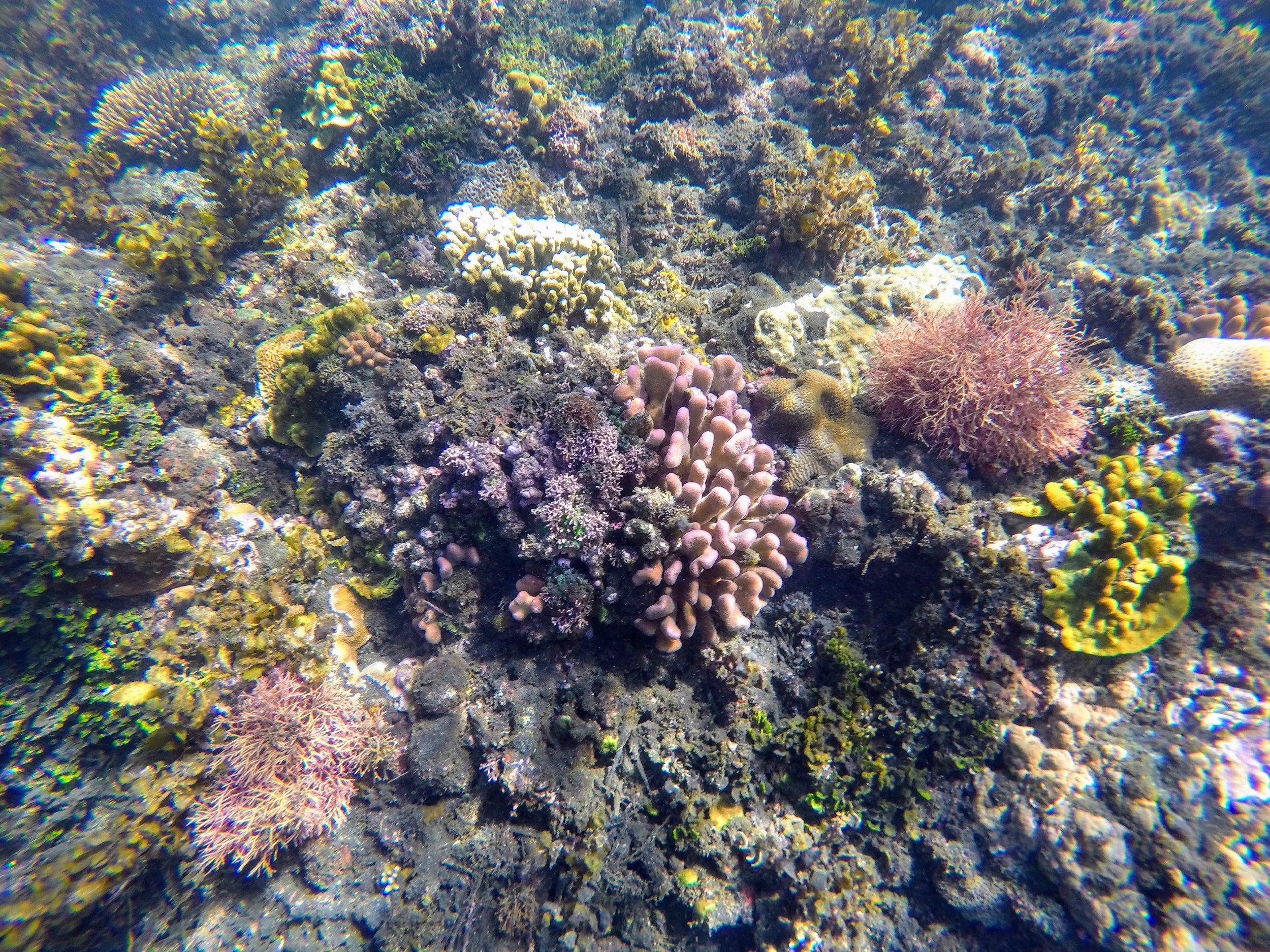 vanuatu south pacific travel 7.jpg