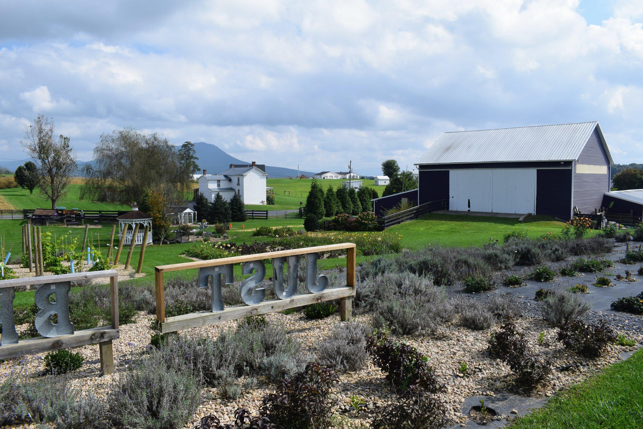 white oak lavender farm harrisonburg va
