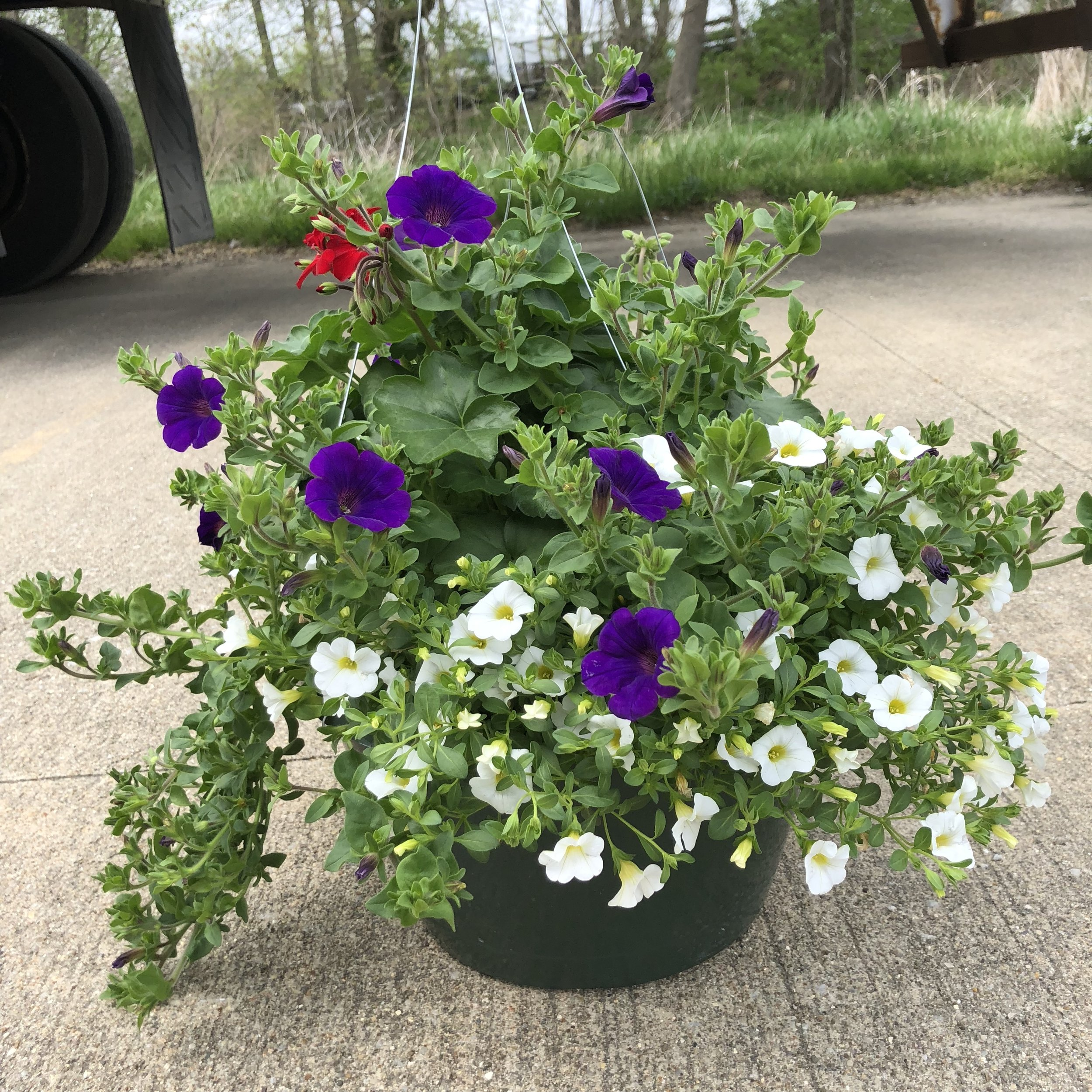 """ALL AMERICAN,  12"""" Hanging Basket; Red, blue and white sun loving annuals (partial sun), Price: $30"""