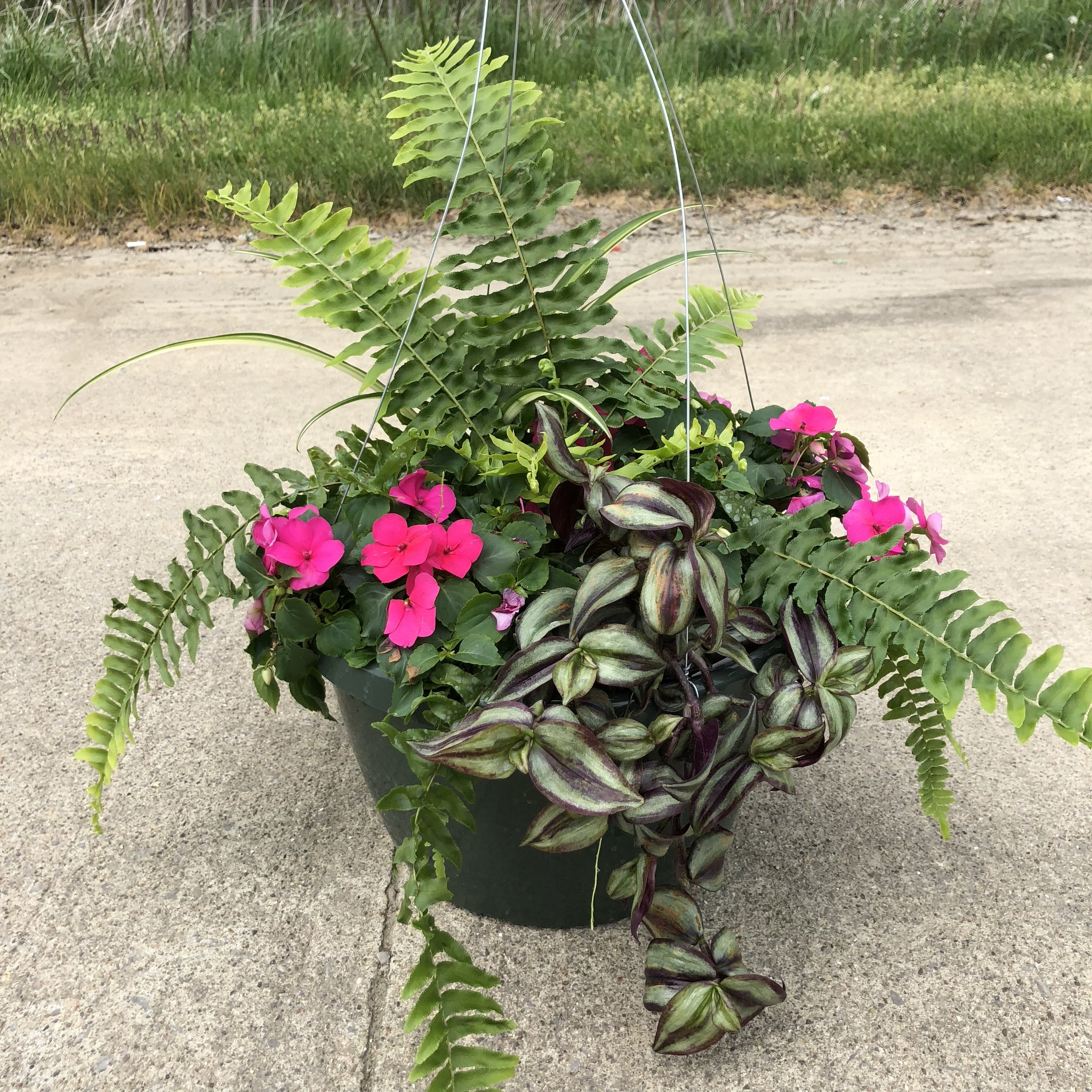 """WOODLAND IN PINKS,  12"""" Hanging Basket; Pink flowers with ferns and foliage, (shade/part sun) Price: $30"""