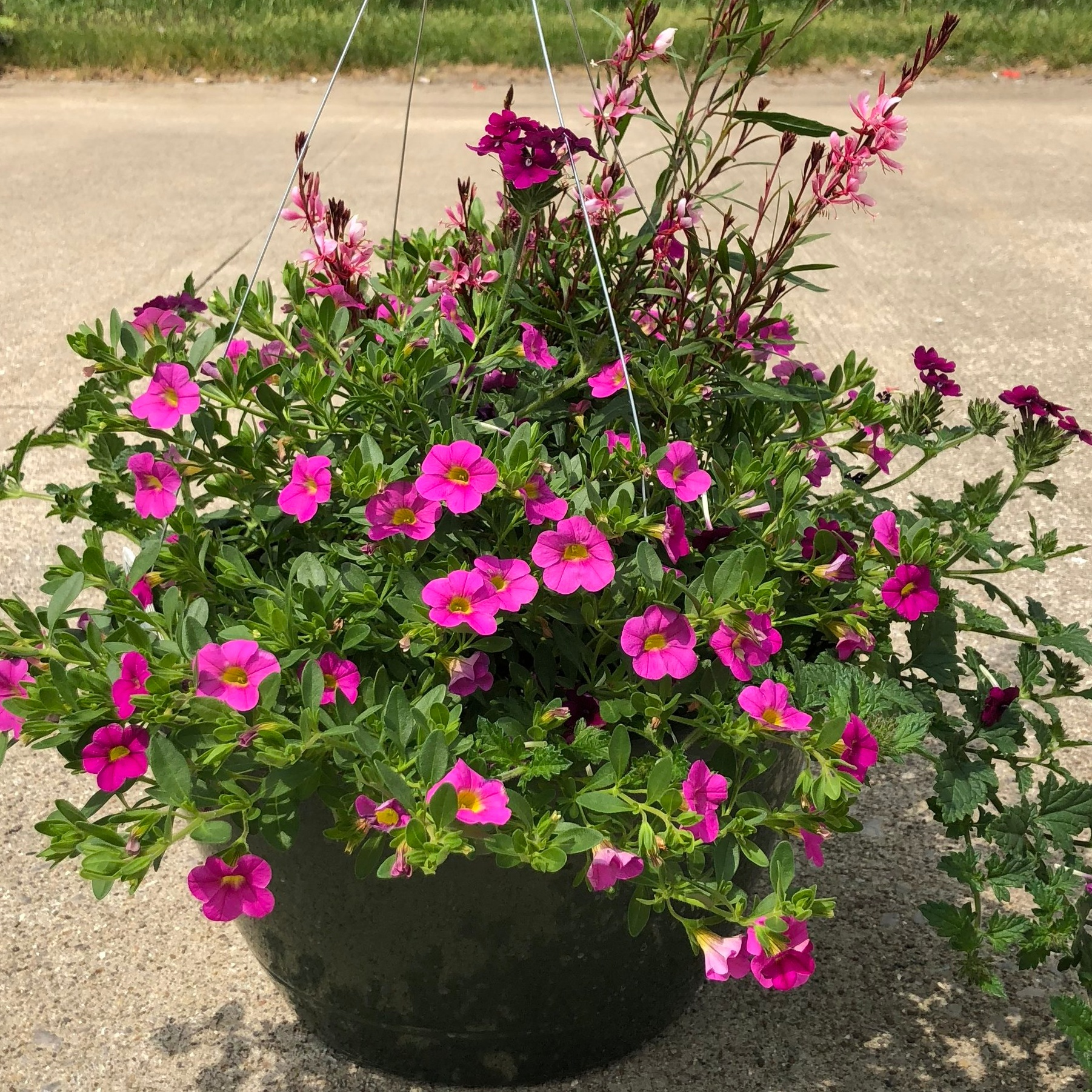 """PRETTY-N-PINKS , 12"""" Hanging Basket; All shades of pink flowers; Price: $30"""
