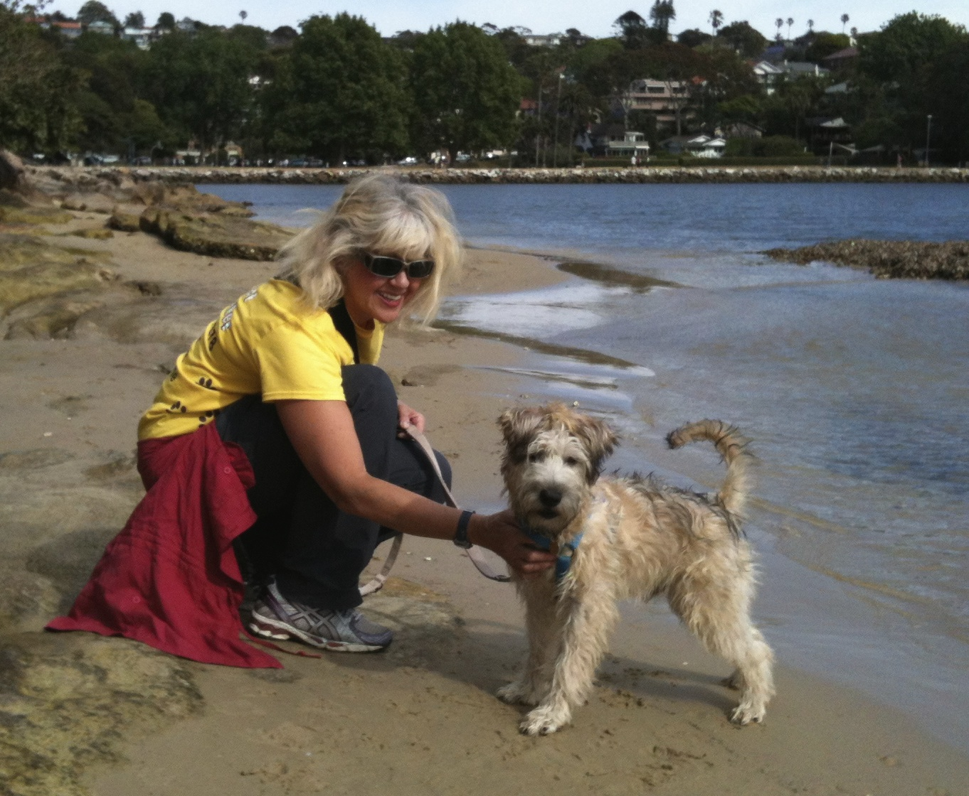 Wheaten Terrier and all round fire cracker Chico