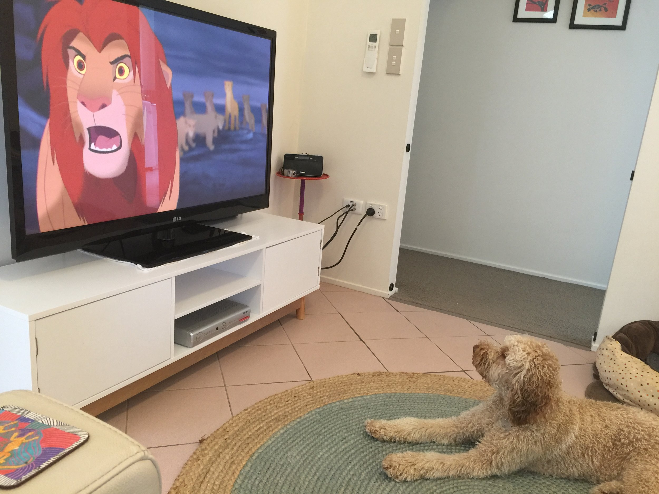 Leo watching his fav movie 'The Lion King'