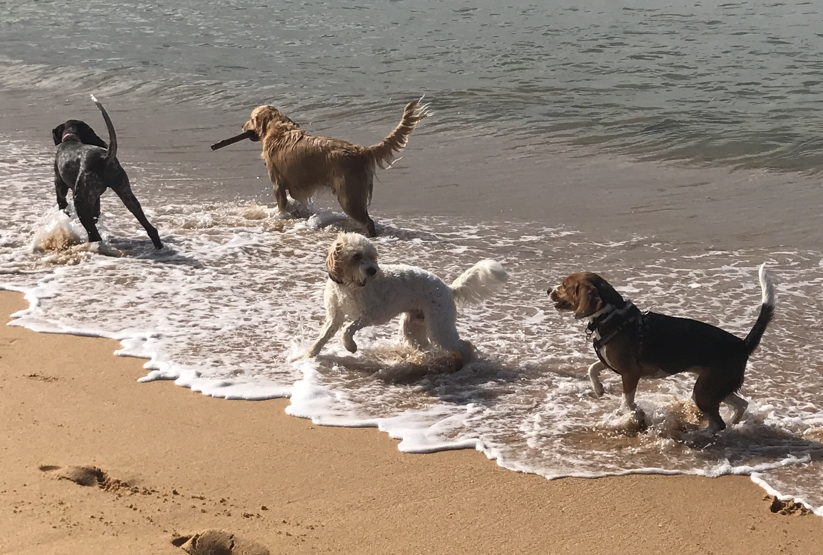 Pepper, Herbie, Sparky & Brodie at McMasters Beach