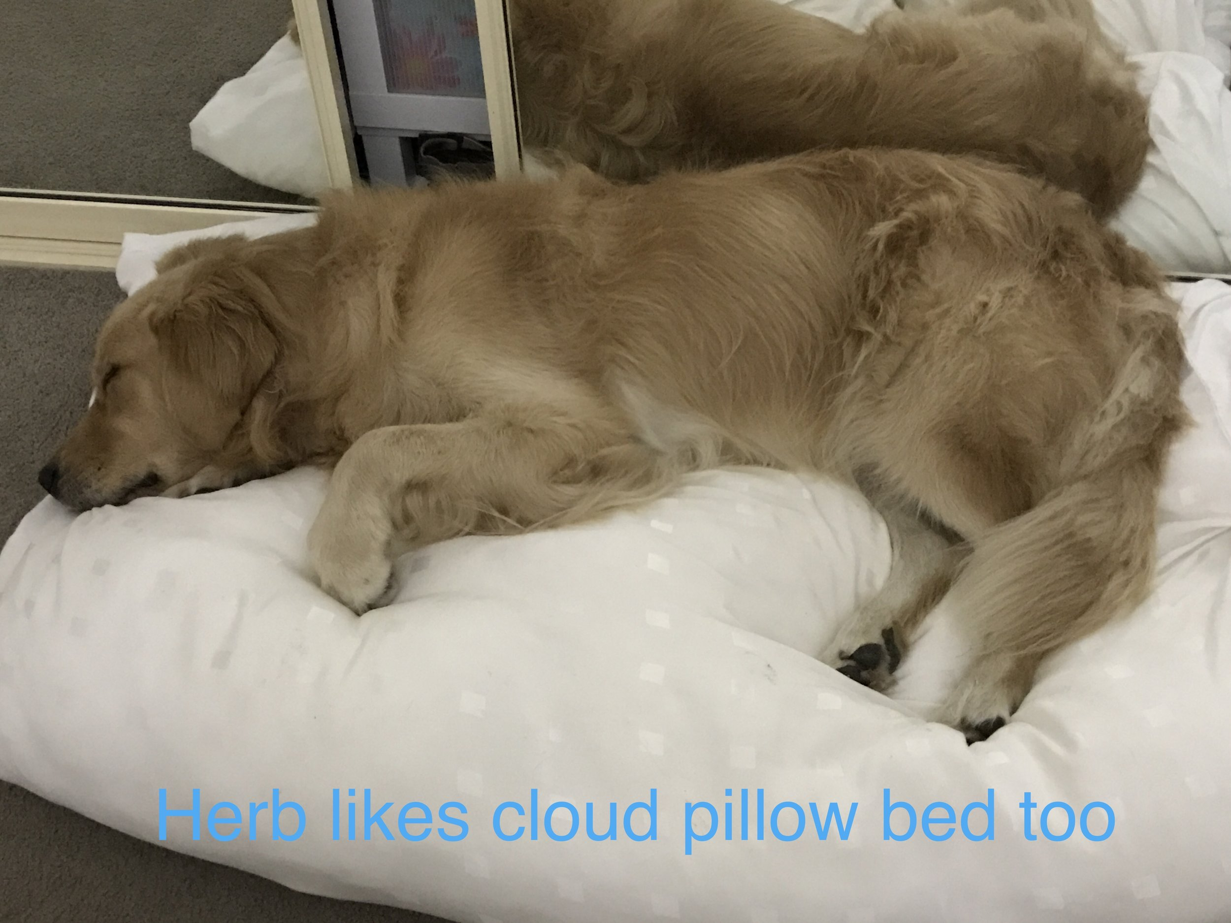 This bed is made of the same material as human pillows and very soft. Some dogs prefer foam which is firmer, but others really like this feel - as you can see.