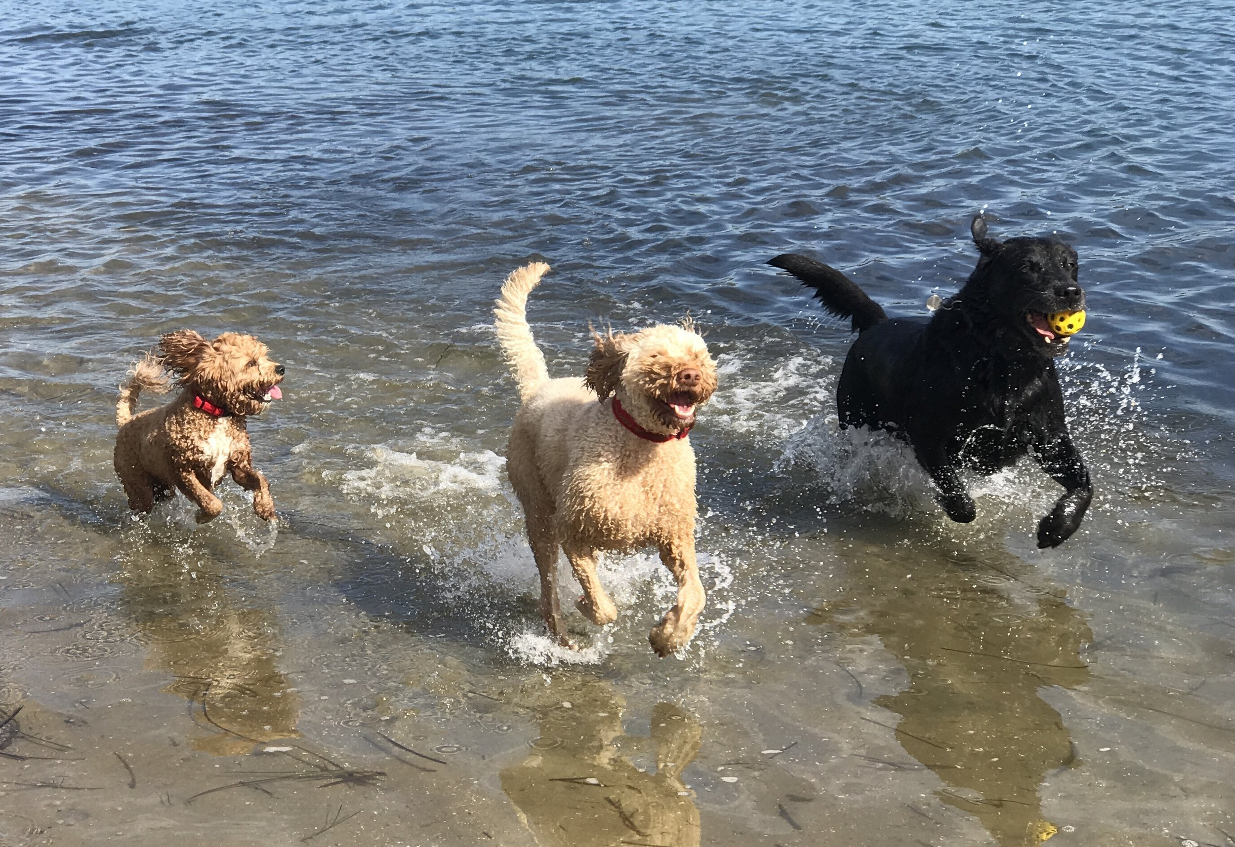 Coconut, Leo and Toby having fun at Davistown