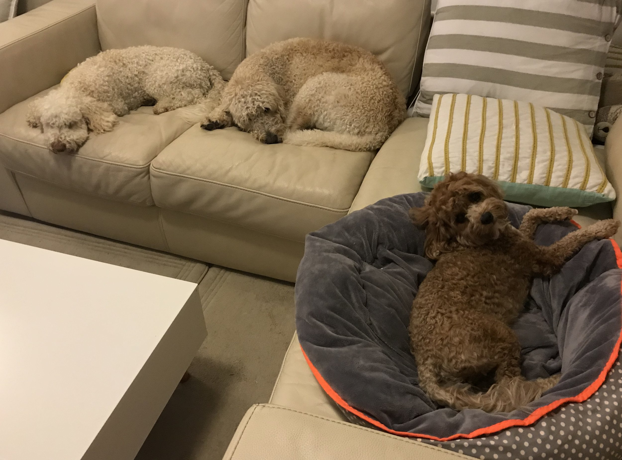 Bella, Hugo and Coconut - where can I sit?!