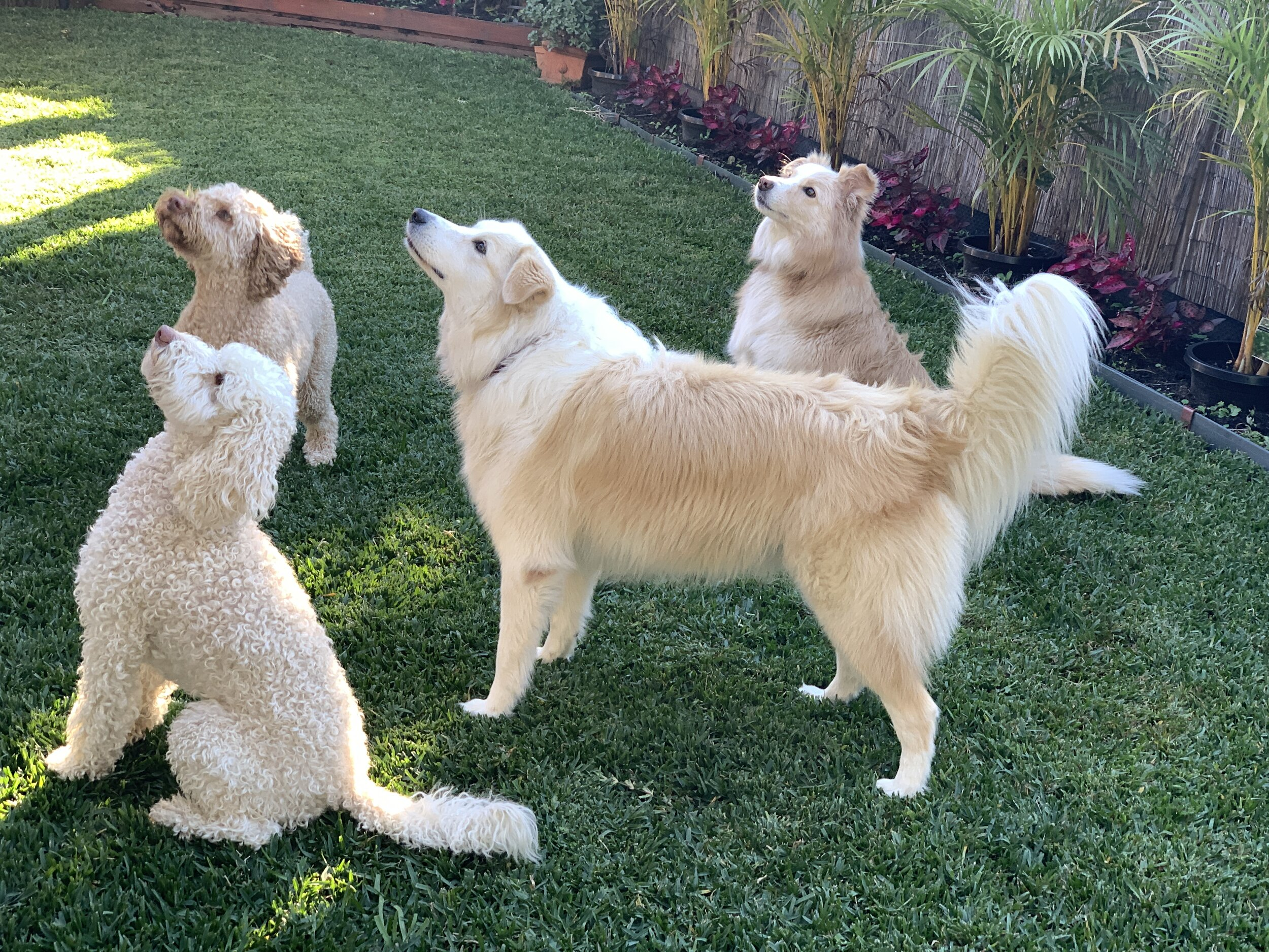 Bella, Leo, Lacie & Kaylee in the Grassy Garden looking at birds!