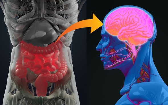 Mind and Gut Connection   Shutterstock image